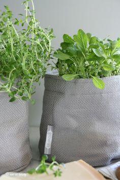 «grow-in» fra Mester Grønn https://www.mestergronn.no/nyheter_cms/2013/mars/verdensnyhet-grow-in-selvvanningsbag/253
