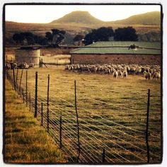 Freestate morning Free State, Just Breathe, My Passion, Country Girls, My Dream, South Africa, Vineyard, Landscapes, Dreams