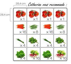 Espacement des tomates plus serré que dans mon livre...