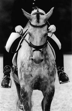 Symmetry  Dressage horse photograph / by JulietRHarrisonPhoto, $60.00