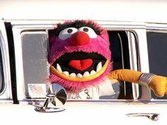 Muppet cruising