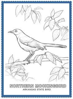 Pin By Jose Miguel Cordero On Northern Mockingbird