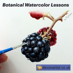 Blackberry fruit watercolor painting tutorial. Capture the bright, shiny berries with your paints. I'd sooner capture them in my mouth (delicious) but failing that, what better way of enjoying them than to paint them! Getting that shine on each individual section is about working in layers. #PaulHopkinson #TheDevonArtist #blackberrypainting #fruitpainting #botancialpainting #fruitart #learntopaintfruit #howtopaintfruit #learnwatercolor #learnwatercolour #watercolorart #watercolourpainting