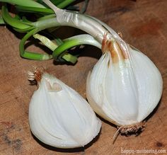 how to grow plants Wondering what to do with that sprouted onion in your produce basket? What if I could show you how to use it to grow a brand new onion in your garden? Green Onions Growing, Growing Greens, Growing Mushrooms, Growing Veggies, Growing Plants, Organic Gardening, Gardening Tips, Desert Gardening, Bucket Gardening