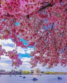 Spring day in Washington DC Beautiful Dream, Beautiful Flowers, Stunning View, Washington Dc, Cherry Blossom Season, Cherry Blossoms, Sakura, Welcome Spring, Destination Voyage