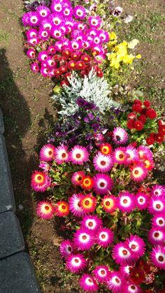 Floral Wreath, Wreaths, Island, Plants, Home Decor, Floral Crown, Decoration Home, Door Wreaths, Room Decor