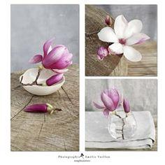 3 tableaux photo sur toile 60x65 cm- Patchwork Magnolia gris - Photographies  Amelie Vuillon
