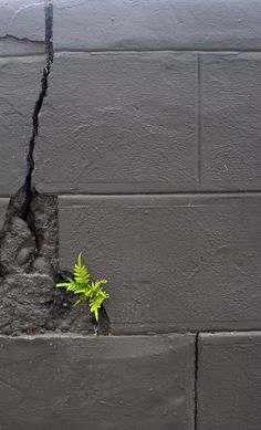 Fern growing in a concrete block wall Concrete Block Walls, Lilies Of The Field, Dame Nature, Bloom Where Youre Planted, Amazing Nature, Mother Nature, Wild Flowers, Beautiful Flowers, Cool Photos