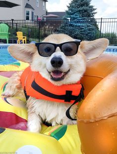 World's happiest dog Wally the Corgi has over 100k Instagram followers | Daily Mail Online