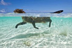 kitty takes a dip in the ocean ... willingly I'm not so sure about... lol