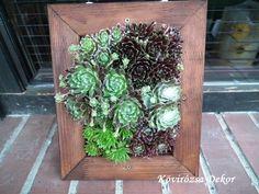 succulent living picture, kövirózsás élőkép   Kövirózsa Dekor Succulents, Wordpress, Plants, Decor, Decoration, Succulent Plants, Plant, Decorating, Planets