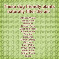 Southern Wag Pet Accessories: Staying on top of the (fur)ball!  Naturally filter the air in your house. Dog friendly plants that freshen your home.