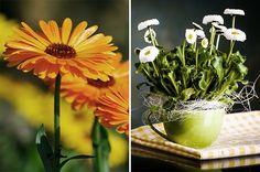 Flores de inverno - Beleza duradoura - Revista Westwing
