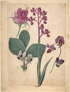 Jacques Le Moyne de Morgues. Studies of Flowers  16th century