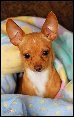Little body, big ears