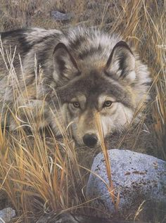 Wildlife Artist Carl Brenders' nature print ONE TO ONE is a striking image of a lone wolf at rest but still on the alert. Wolf Love, Wolf Pictures, Animal Pictures, Beautiful Creatures, Animals Beautiful, Animal Espiritual, Tier Wolf, Animals And Pets, Cute Animals