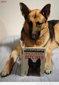 My Dog's Favourite Book