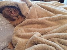 discover one more fancy cat bed blanket by tigga towers luxury pet brand https
