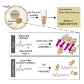 Amyloid-like Self-Assembly of a Cellular Compartment: Cell