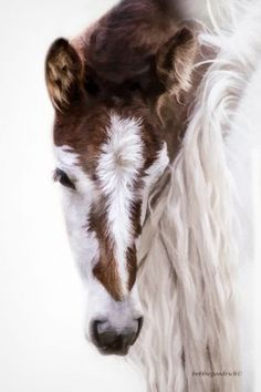 Foal by Bobbie Goodrich, absolutely beautiful baby horse! cute paint markings and fuzzy face with white blaze. Amazing horse photography. Please also visit www.JustForYouPropheticArt.com for colorful art and a few horse paintings you might like to pin. Thanks for looking!
