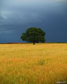 Soledad by anpegom, via Flickr