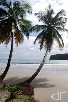 Tropical dreams!