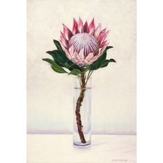 King Protea - original oil painting by Eleanor Butler available on… Art Floral, Floral Drawing, Pastel Drawing, Protea Art, Protea Flower, King Protea, You Draw, Art And Illustration, Illustrations