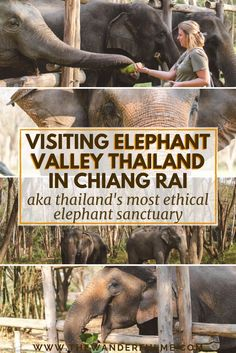 Visiting Rescued Elephants at Elephant Valley Thailand Planning a trip to Thailand and want to visit an elephant sanctuary? In Chiang Rai, you'll find no doubt the most ethical elephant sanctuary in Thaila. Thailand Travel Tips, Asia Travel, Trip To Thailand, Bangkok Trip, Time Travel, Elephant Sanctuary Thailand, The Beautiful Country, Travel Scrapbook, Travelogue