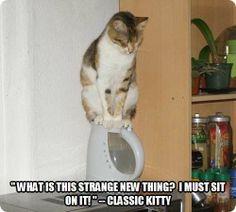 I'm glad people don't behave the same!
