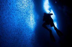 A Corrida das Sardinhas-30 fenômenos naturais que você não vai acreditar que realmente existem