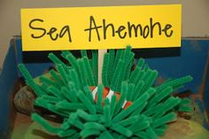 Swimming creatures science: plastic clownfish in a pipe cleaner sea anemone (good for coral reef diorama)