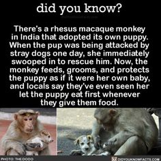 The best of friends  #socute #monkey #dog #puppylove Download our free App: [LINK IN BIO]