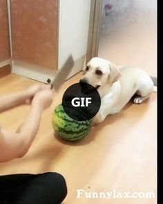 The dog helps the man make a fruit smoothie in the kitchen
