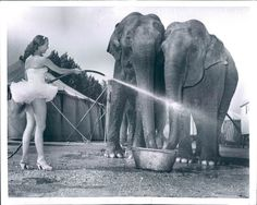 Circus elephants getting showered