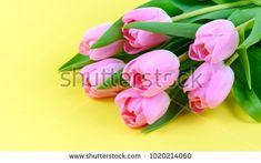 Pink fresh tulips bouquet on yellow background Tulip Bouquet, Yellow Background, Tulips, Berries, Flowers, Plants, Pink, Bury, Plant