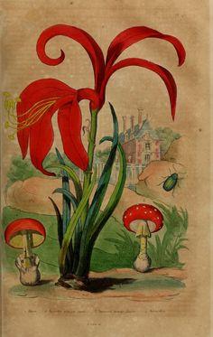1 - Dictionnaire pittoresque d'histoire naturelle et des phénomènes de la nature / - Biodiversity Heritage Library
