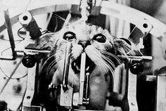 please buy cruelty free products- this is horriffic - Animal testing, Ohio 1962 @DisturbingPict