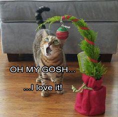 Miezi singt ganz Weihnachtslieder