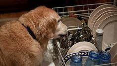 Dishwasher Tips for First Time Homeowners You've Never Heard