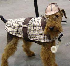 sherlock holmes dog costume - welsh terrier