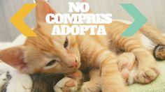 Adoptar un gato es una gran responsabilidad. Es una vida a la que hay que cuidar y por eso antes de adoptar un animalito debemos estar 100% seguros y conscientes de lo que estamos haciendo.