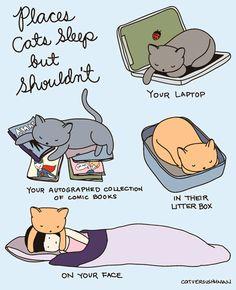 Posti dove i gatti dormono ma non dovrebbero. Il tuo portatile. La tua autografata collezione di giornali a fumetti. Nella loro lettiera. Sul tuo viso. Yasmine Surovec