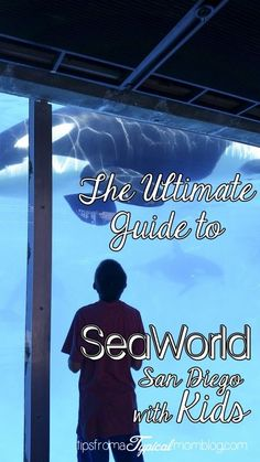 The Ultimate Guide to Visiting SeaWorld San Diego with Kids