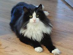 Oscar Adorable Cats. Cats, Cute cats, kittens, Pretty cats