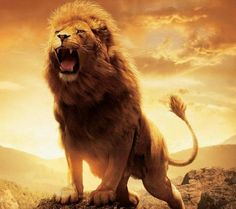 "Aslan, the lion in The Lion, the Witch, and the Wardrobe (The Chronicles of Narnia) represents Jesus Christ, the Lion of Judah. ""Of course He's not safe. Animals And Pets, Cute Animals, Nature Animals, Gato Grande, Lion Wallpaper, Computer Wallpaper, Wallpaper Ideas, Tribe Of Judah, Lion Pictures"