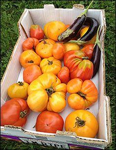 Tomates patrimoniales.