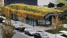 """Te Kaitaka 'The Cloak' by Fearon Hay Architects. The architecture firm has built upon this structure a """"contoured living green roof,"""" including a brass mesh cloak over a lattice of engineered timber. It's part of the Auckland airport building"""