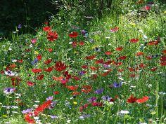 Spring in Lesvos, Greece Spring Flowers, Wild Flowers, Beautiful Islands, Beautiful Places, Seasons In The Sun, Greek Easter, Beautiful Flowers Garden, Over The Rainbow, Greek Islands