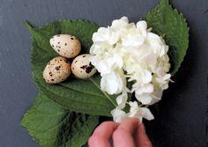 Inner-city Eggs | Edible Feast via Edible Vancouver #ediblebackyard #ediblepantry