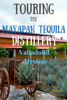 Tequila in the morning? Why not! Mayapan Tequila Distillery - Valladolid, #Mexico #Travel